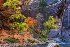 Fall-Colors-Zion-Narrows
