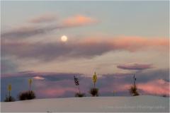 DSC3954-Yucca-Moon-web