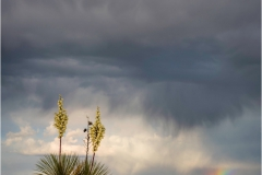 DSC3913-Yucca-and-Rainbow-1-web