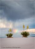 Yucca-and-Rainbow