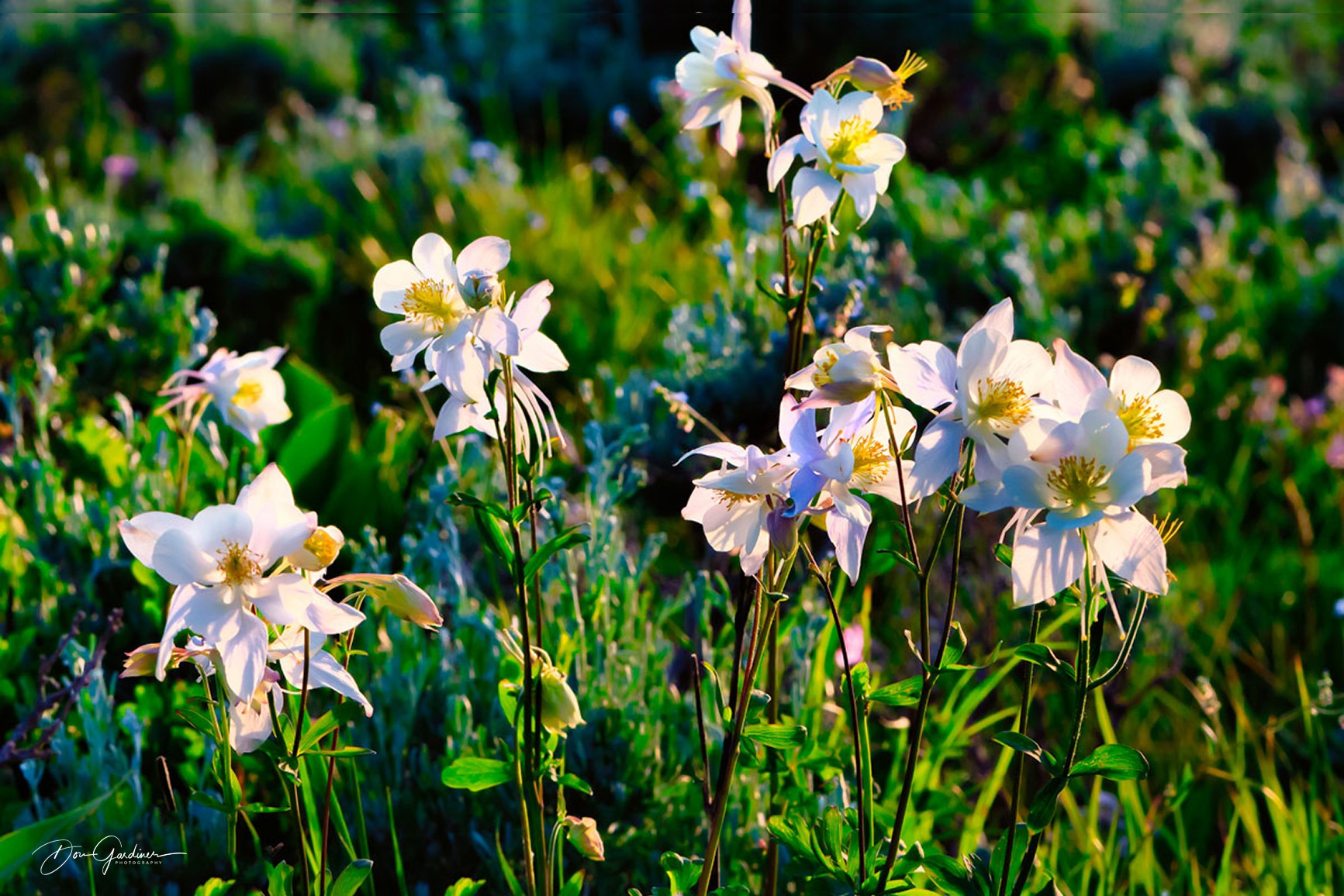 DSC3535-Columbine-Group-1-web