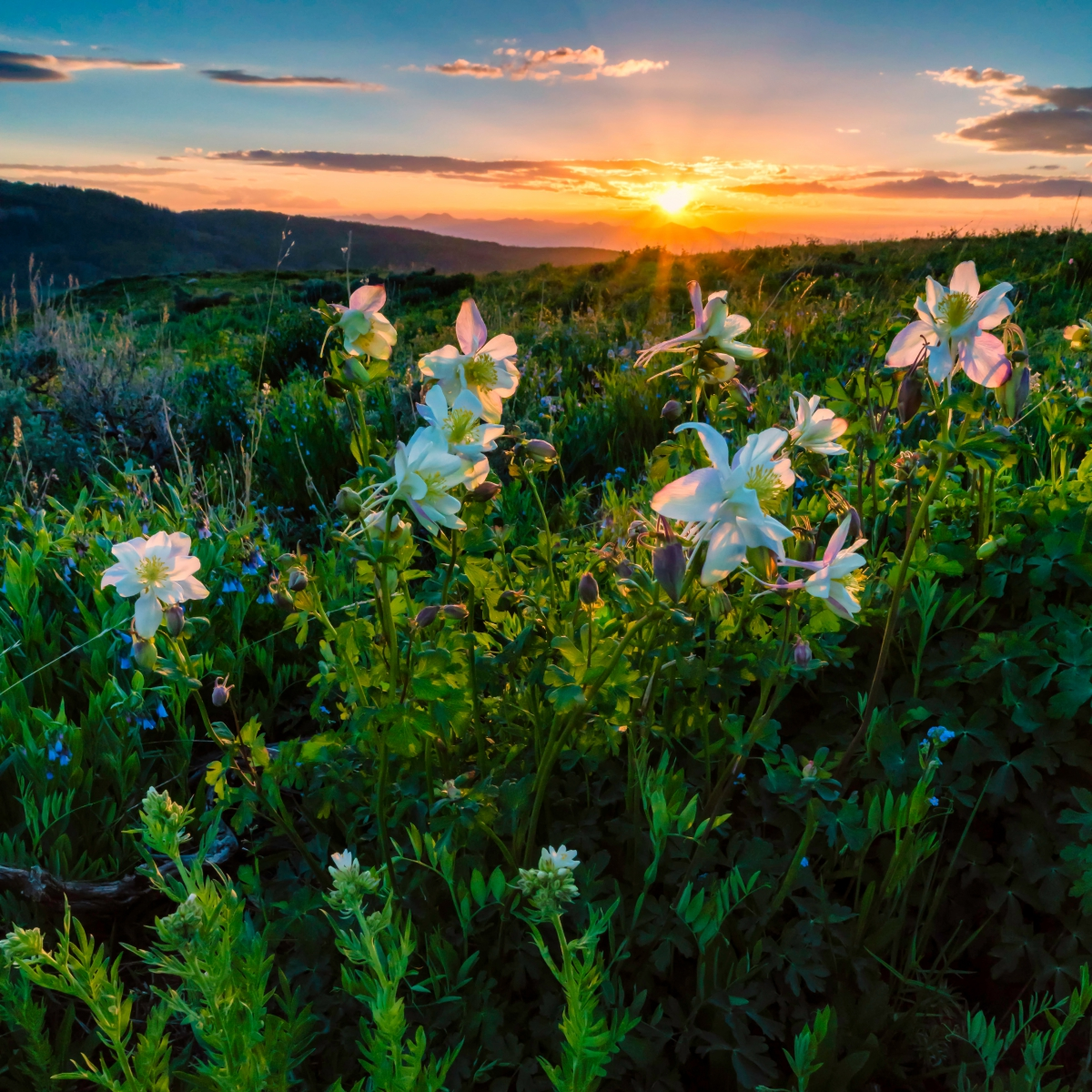 Columbine Sunset